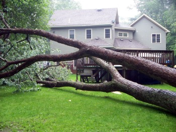 neighbors tree falls in my yard